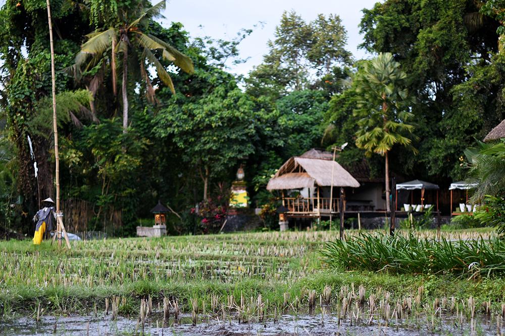 Plataran Ubud Hotel & Spa - viaggio di nozze a Bali 04