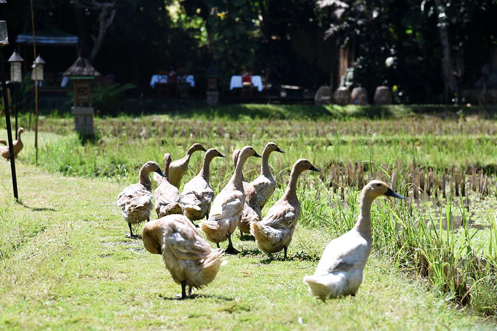 Plataran Ubud Hotel & Spa - viaggio di nozze a Bali 07